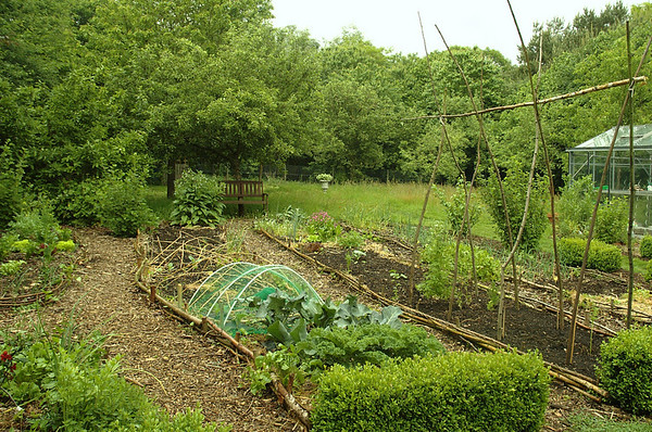 De moestuin | The vegetable garden